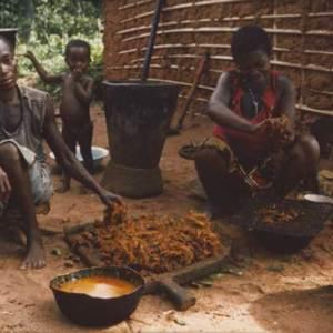 Le palmier à huile, plante essentielle pour les Ngbaka (Centrafrique)